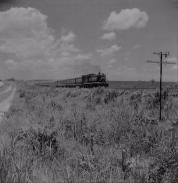 Trem de passageiros da Cia. Paulista, entre Vera Cruz e Garça : tração a óleo diesel : Município de Garça (SP) - 1960