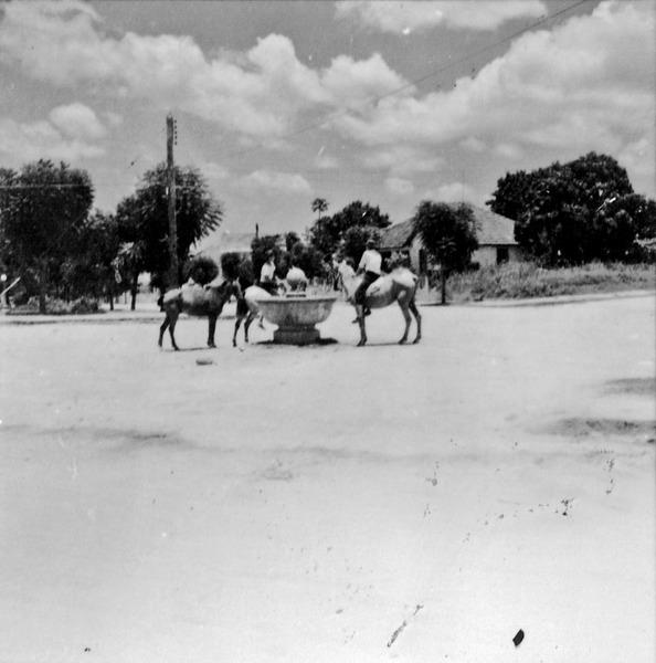 Bebedouro para cavalos : Município de Garça (SP) - 1960
