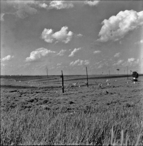 Relevo suave no município de Bento de Abreu (SP) - 1960