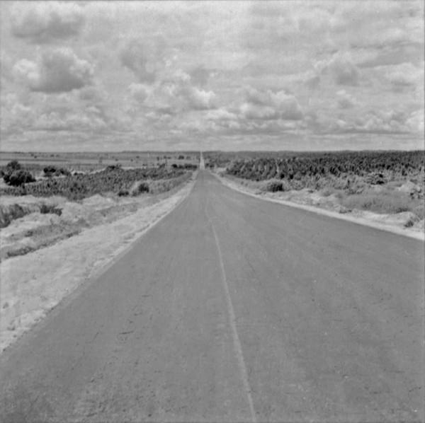 Relevo suave : Município de Penápolis (SP) - 1960