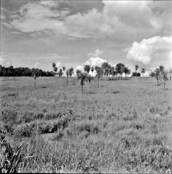 Pasto de invernada : Município de Birigui (SP) - 1960