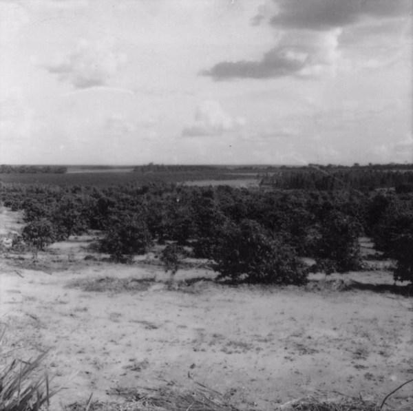 Relevo suavemente ondulado no município de Pindorama (SP) - 1960
