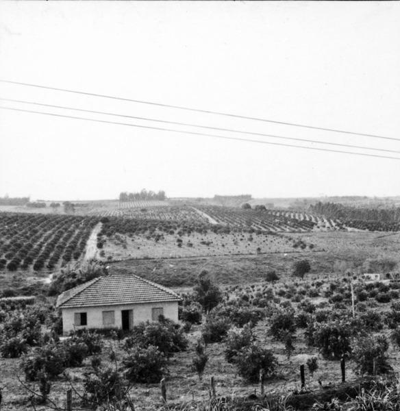 Sítio com plantações de laranja, no município de Limeira (SP) - 1968