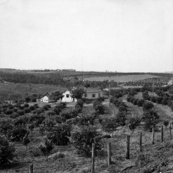 Sítio com plantações de laranja, vendo-se a casa do colono : Município de Limeira (SP) - 1968