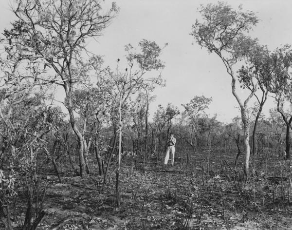 Cerrado queimado perto do vale do rio Santa Tereza : Peixe (TO) - 1953