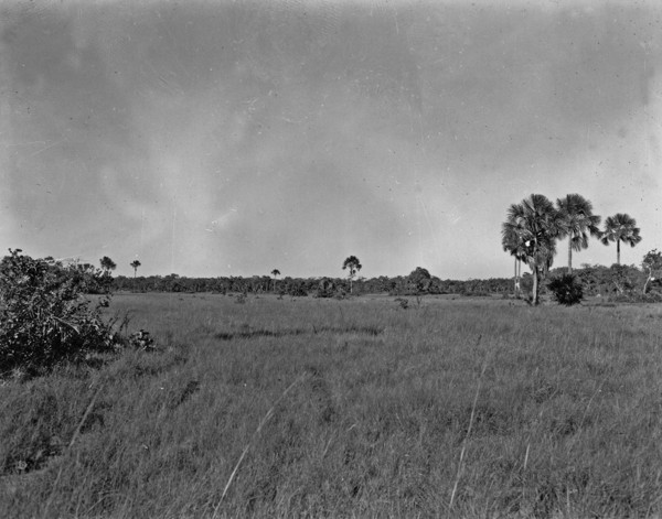 Várzea com buritizal perto de Peixe (TO) - 1953