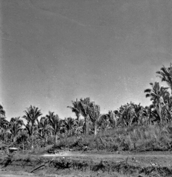 Rio Tocantins : babaçual : Araguaína (TO) - [195-?]