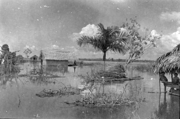 Varas de mandioca salvas da enchente em Iranduba (AM) - 1953