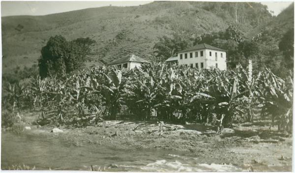 Plantação de banana : Iconha, ES - [19--]