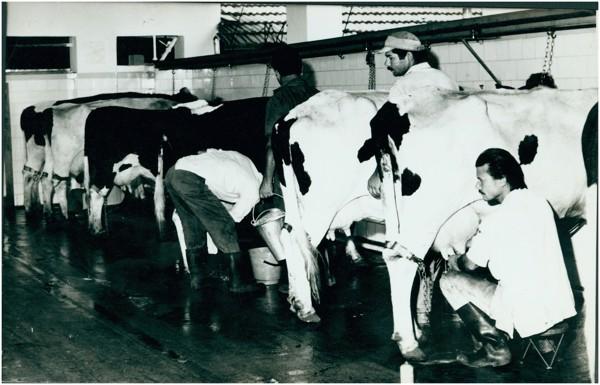 Fazenda São João da Vargem : Hortolândia, SP - 1975