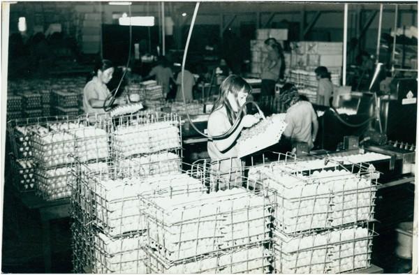 [Vista interna da] Granjas Ito S.A. : Hortolândia, SP - 1975